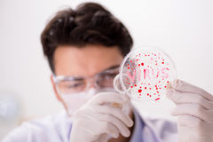 The male doctor working in the lab on virus vaccine Royalty Free Stock Photo