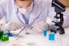 The male doctor working in the lab on virus vaccine Stock Photos
