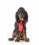 Male dog Royalty Free Stock Photo