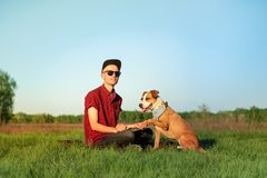 Male dog owner and trained staffordshire terrier giving paw stock photography