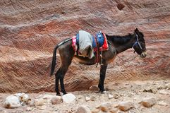 Male donkey and dog on rock wall background Stock Image