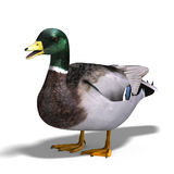 Male duck mallard royalty free illustration