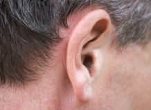 Male ear royalty free stock photography