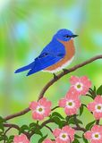 Male Eastern Bluebird (Sialia sialis) Royalty Free Stock Photography