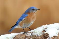 Red tail hawk soaring stock photo image 51129608 for Oiseau bleu et orange