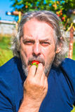 A male eating freshly picked strawberry Stock Image