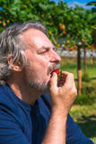 A male eating freshly picked strawberry Stock Images