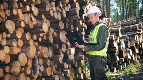 Male engineer with a laptop is looking at felled timber stock footage