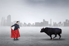 Male entrepreneur fighting with a bull. Young businessman using a red cloth to face angry bull, symbolizing business strategy Royalty Free Stock Images