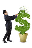 Male entrepreneur manage the money tree. Young business person using a scissors to cut and manage the growth of money tree Royalty Free Stock Photography