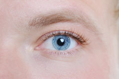 Male eye. Macro portrait male eye close-up Royalty Free Stock Image