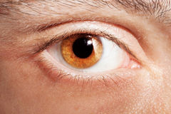 Male eye Stock Image