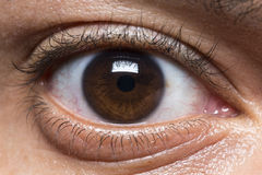 Male eye looking straight to camera Stock Photos