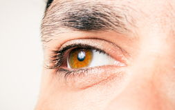 Male eye macro shot Royalty Free Stock Image