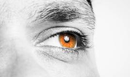 Male eye  shot. Male eye macro shot closeup Royalty Free Stock Image