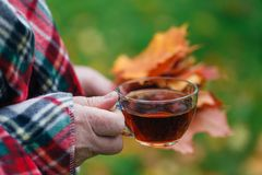 Male in fall forest walking and drink hot tea Royalty Free Stock Image