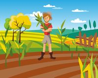 Male farmer harvesting crop, cultivated agriculture field, rural landscape vector Illustration. Male farmer harvesting crop, cultivated agriculture field, rural Royalty Free Stock Images