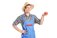 Male farmer holding a tomato Stock Image