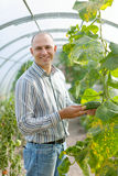 Male farmer looks cucumbers plant Royalty Free Stock Photography