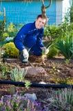 Male farmer planting an iris flower Royalty Free Stock Photo