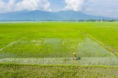 Male farmer plowing rice field in Bali royalty free stock image