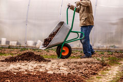 Male farmer puts in the ground fertilizer manure stock photos