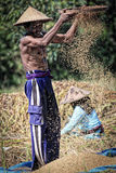 A male farmer sieving grains through the sieve Royalty Free Stock Photos