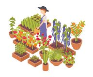 Male farmer watering vegetables and flowers growing planters isolated on white background. Eco friendly farming, crops. Cultivation, organic gardening. Colorful royalty free illustration