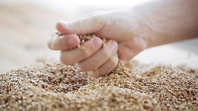 Male farmers hand pouring malt or cereal grains stock video footage