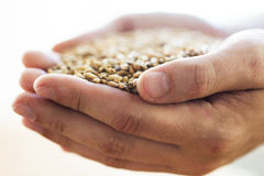 Male farmers hands holding malt or cereal grains. Agriculture, farming, prosperity, harvest and people concept - close up of male farmers hands holding malt or Stock Images