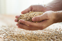Male farmers hands holding malt or cereal grains. Agriculture, farming, prosperity, harvest and people concept - close up of male farmers hands holding malt or Stock Photos