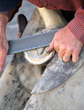 Male farrier. Royalty Free Stock Photography