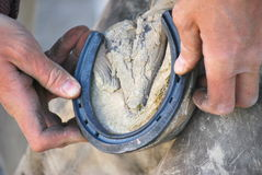 Male farrier. Stock Photo