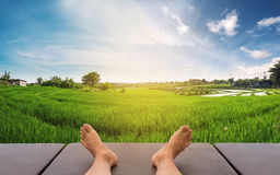 Male feet relaxing on leather bed at rice field in countryside area in sunrise morning Royalty Free Stock Image