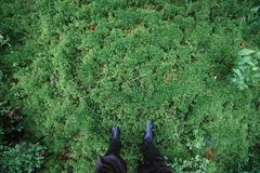 Male feet in rubber boots in thick moss Stock Images