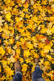 Male feet walking in loads of yellow leaves in autumn wearing br Stock Images