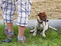 Male  feet and young small dog Royalty Free Stock Photo