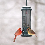 Male and Female Cardinals at feeder Stock Image