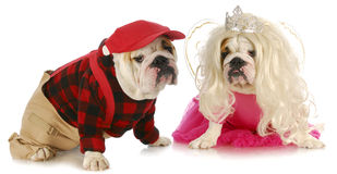 Male and female dog Stock Photo