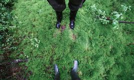 Male and female feet in rubber boots in thick moss.  Stock Photo