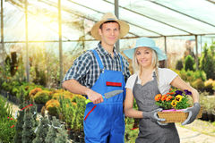 Male and female gardeners with basket and shovel in hothouse Royalty Free Stock Photography