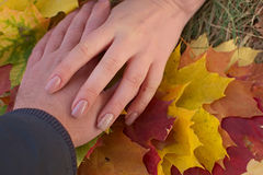 Male and female hand on a background of maple leaves (Autumn). Royalty Free Stock Photo