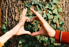 Male and female hands put together in heart shape. Couple in love near tree. Mans and womans hands. Male and female hands put together in heart shape. Couple in royalty free stock photography