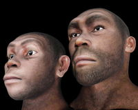 Male and female homo eretus - 3D render. Portrait of male and female homo eretus in black background- 3D render Stock Images