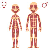 Male and female muscle chart Royalty Free Stock Photo