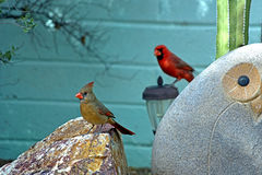 Male and female northern cardinals. Standing on garden ornaments Royalty Free Stock Image