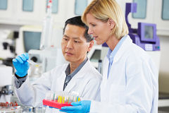 Male And Female Scientists Working In Laboratory Royalty Free Stock Photography