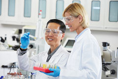 Male And Female Scientists Working In Laboratory Stock Image
