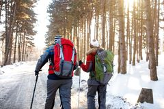 Male and female skiers walking through forest, back view. Male and female skiers with backpacks walking through forest, back view Stock Image