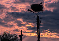 Male and female stork in the nest, Poland. Male and female stork at sunset in the nest - typical spring rural landscape in Podlasie, Poland Royalty Free Stock Images